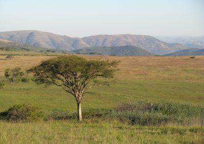 Mkhunyane (7)